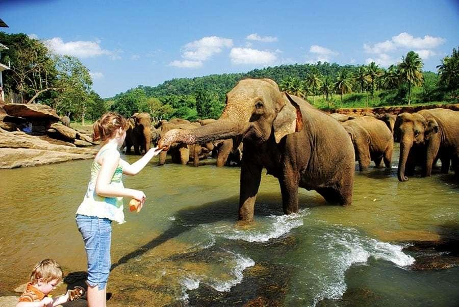 Шри-Ланка - туры на двоих