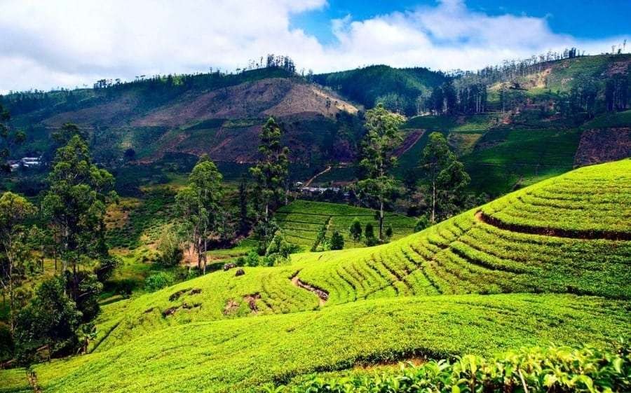 Перелет Киев - Шри-Ланка