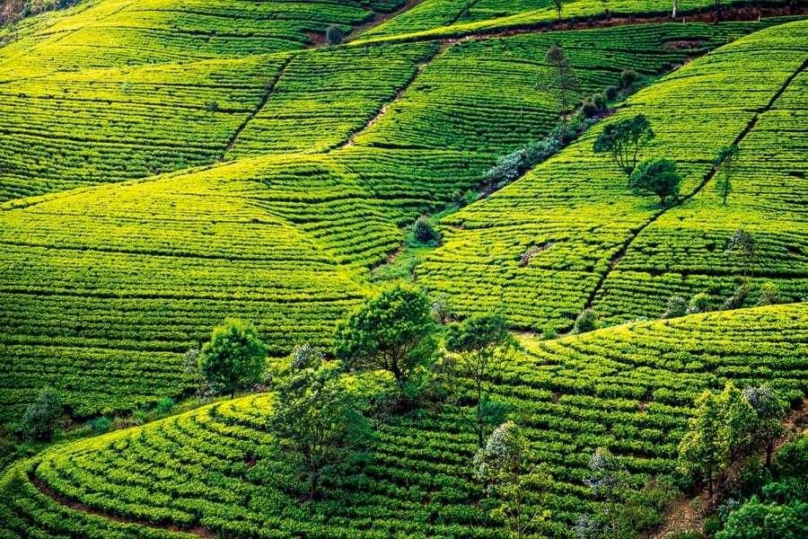 Шри-Ланка: туры, Одесса