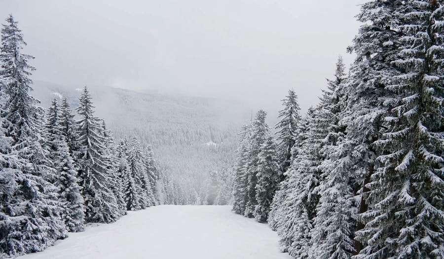 Зима в Боровце