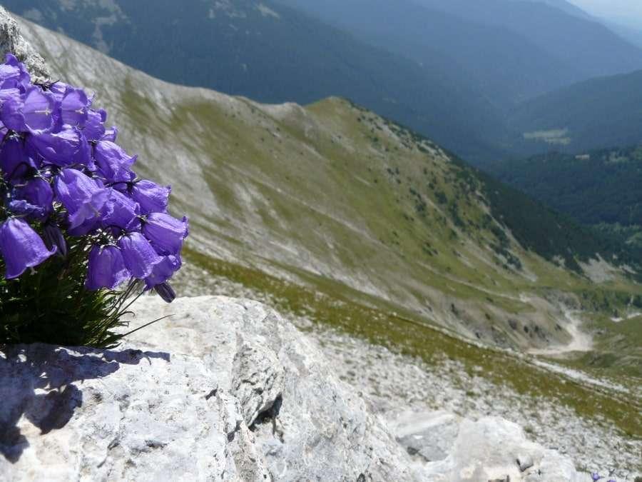 Баюви-Дупки, Болгария