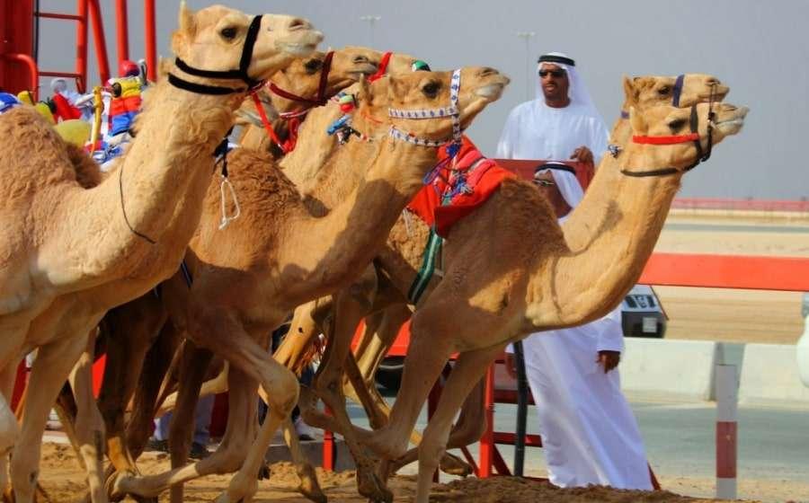 Достопримечательности Дубая самостоятельно