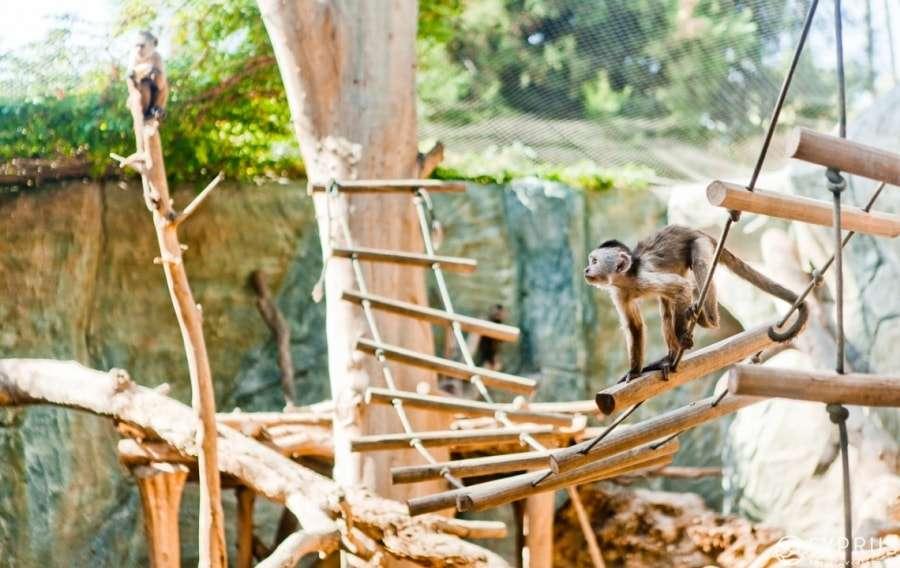 Кипр, зоопарк, Лимассол