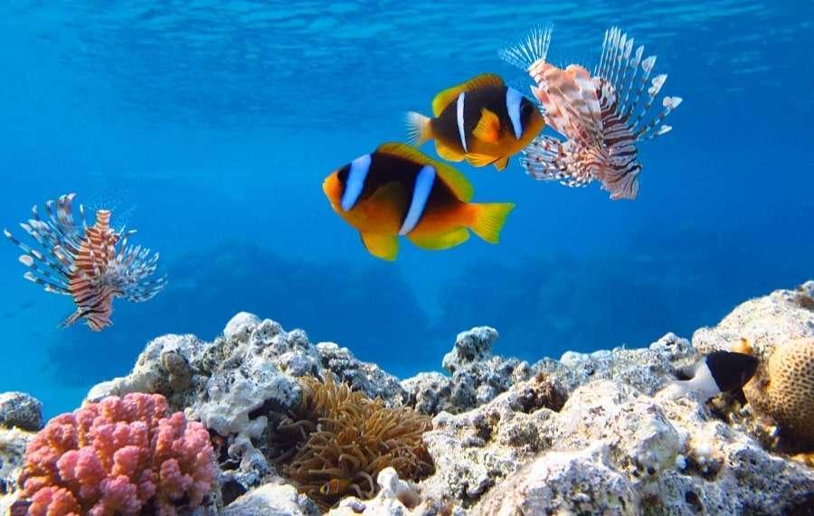 Подводный мир в бухте Наама Бей