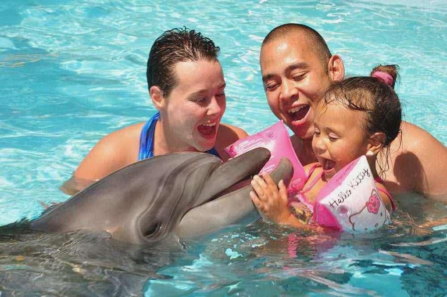 Семейное плавание с дельфинами в Шарме