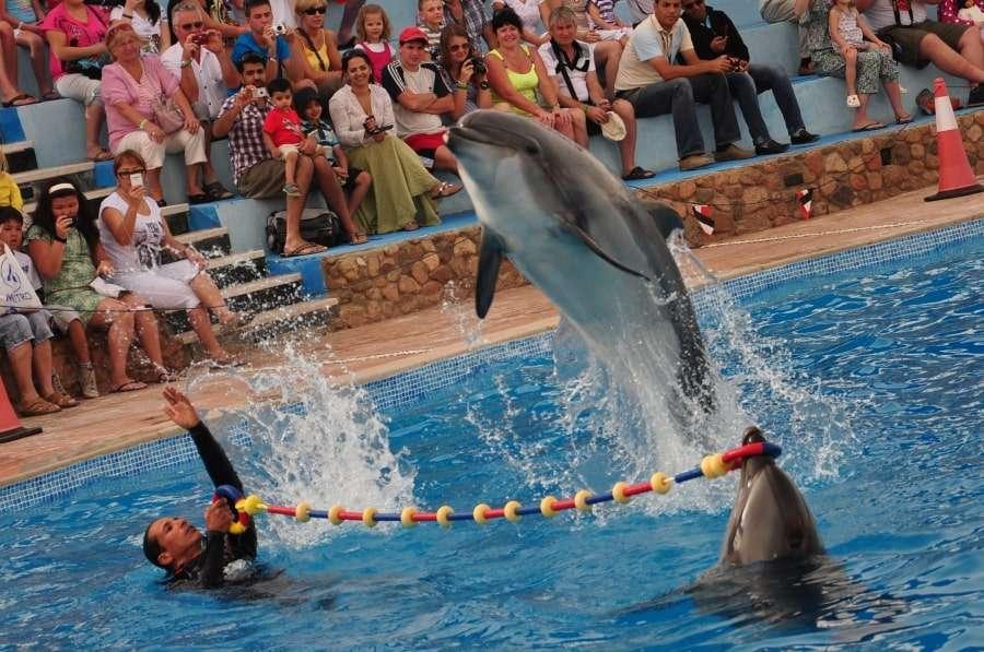 Шоу дельфинов в дельфинарии Шарма
