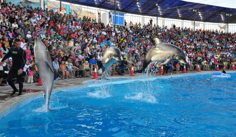 Шоу дельфинов в Шарм-эль-Шейхе