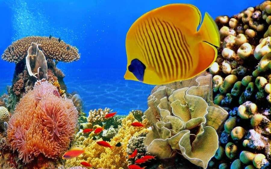 Ихтиофауна Красного моря