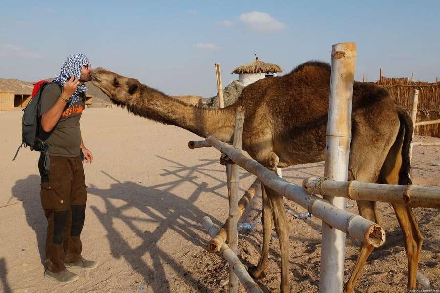 Турист с верблюдом